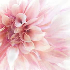 Dahlia Splendor by Terry Davis
