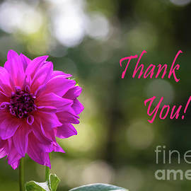 Dahlia Thank You by Norma Brandsberg