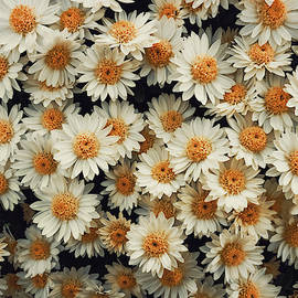 Daisies Pattern by Psycho Shadow