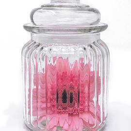 Daisy in a Jar by Sandi Kroll