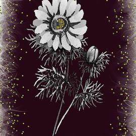 Daisy Sparkle by Rosalie Scanlon