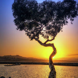 Dana Point Harbor Heart Tree by Lonnie Christopher