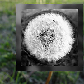 Dandelion Abstract - ver. 2 by William Moore