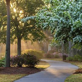 Daniel Island Morning Light by Donnie Whitaker