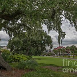 Daniel Island - Southern Live Oak Tree by Dale Powell