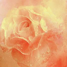 Dappled Rose by Terry Davis
