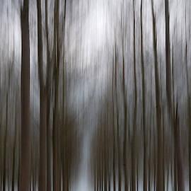Dark Avenue by Clive Beake