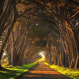 Dawn At The Cypress Tree Tunnel by Brad Scott