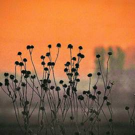 Dawn Flowers by Curtis Tilleraas