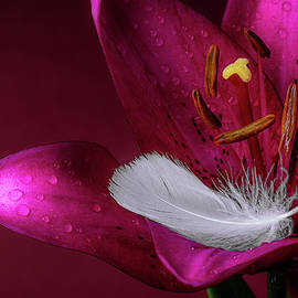 Daylily with Feather by Tom Mc Nemar