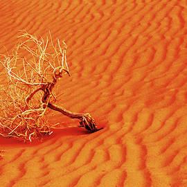Lone Tree in Fiery Red Sand by Alan Socolik