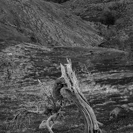Dead Tree In The Fields In Monochrome by Iordanis Pallikaras