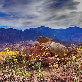 Death Valley flowers by Minnetta Heidbrink
