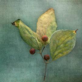 Deep Blue Autumn by Terry Davis