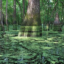 Deep Green on Ebenezer Creek by Matt Richardson