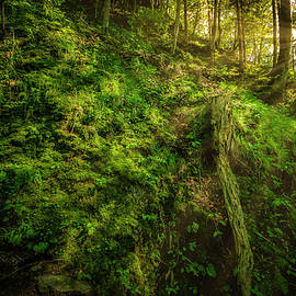 Deep In The Forests Of Bavaria by David Morefield