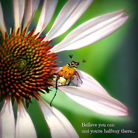 Delta Flower Beetle on Echinacea by Marilyn DeBlock