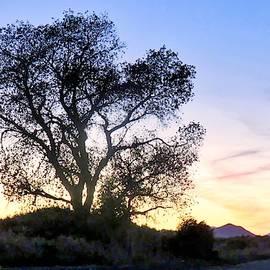 Desert Farm Sunset by Judy Kennedy