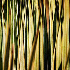 Desert Grasses I by Leda Robertson