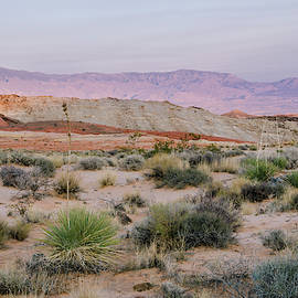 Desert On Fire No.3 by Margaret Pitcher