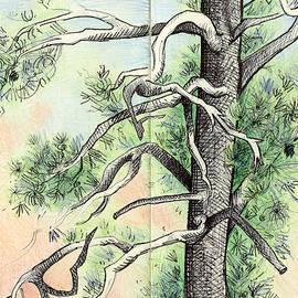 Desert Pine Sketch by Henry Snell