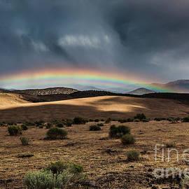 Desert Storm by Webb Canepa