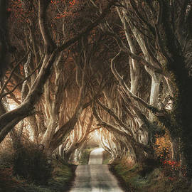 DH - The Dark Hedges by Pawel Klarecki