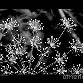Dill Fireworks by Patricia Overmoyer