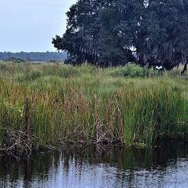 Distance Across Lake Woodruff by Warren Thompson
