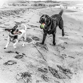 Dog Ball Buddies by Christina Ford