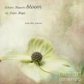 Dogwood Blossom by Eva Lechner