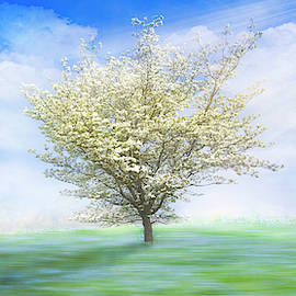 Dogwood in the Mist Dreamscape by Debra and Dave Vanderlaan