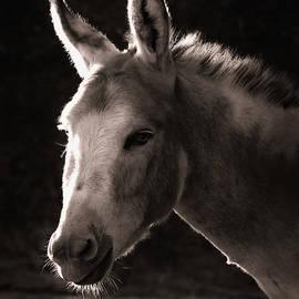Donkey by Christine Sponchia