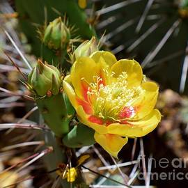 Don't Mind The Thorns by Janet Marie