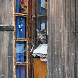 Doorway Cat by Morey Gers