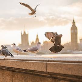 Doves And Seagulls Over The Thames In London by Top Wallpapers