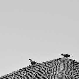 Doves On Roof by Larah McElroy