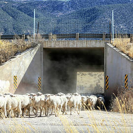 Down the Mountain and Thru the Tunnel by Donna Kennedy