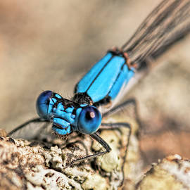 Dragonfly Close-up by Francis Sullivan