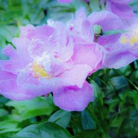 Dreaming in Pink Peony by Diane Lindon Coy