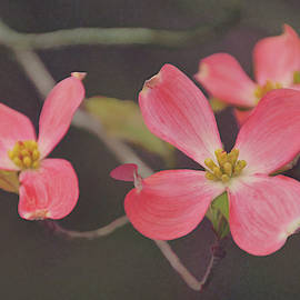 Dreaming Of Dogwoods by Leda Robertson
