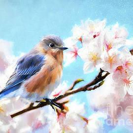 Dreamy Female Bluebird by Tina LeCour
