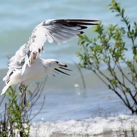 Dreamy Seagull by Deb McPherson