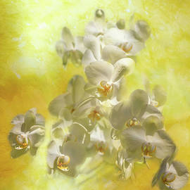 Dreamy Yellow Orchids by Lorraine Baum