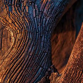 Driftwood At Sunset by Robert FERD Frank