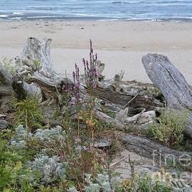 Driftwood Beach Scene by Lori Pessin Lafargue
