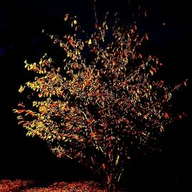 Dry Leaves Grow by Alida M Haslett
