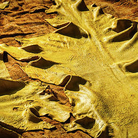 Drying Yellow Leather Hides - Morocco by Stuart Litoff