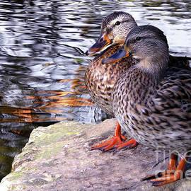 David Brown - Ducks 03