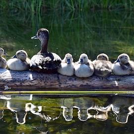 Ducks in a Row by Dana Hardy